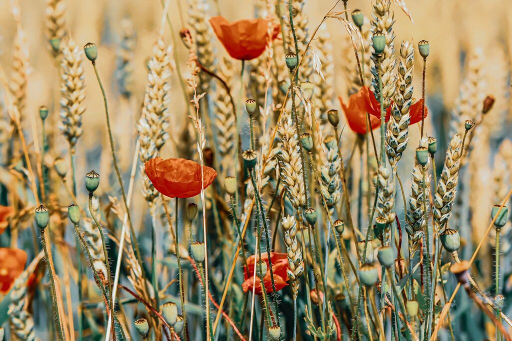 poppies confidence building blog